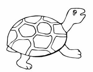 Черепаха картинки раскраски (28)