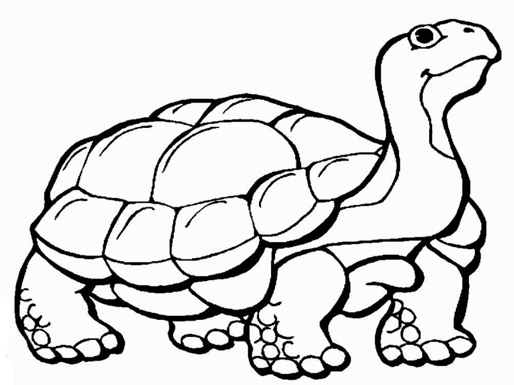 -картинки-раскраски-3 Черепаха картинки раскраски (3)