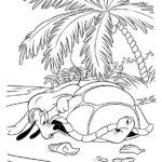 Черепаха картинки раскраски (4)