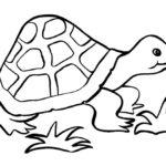 Черепаха картинки раскраски (5)