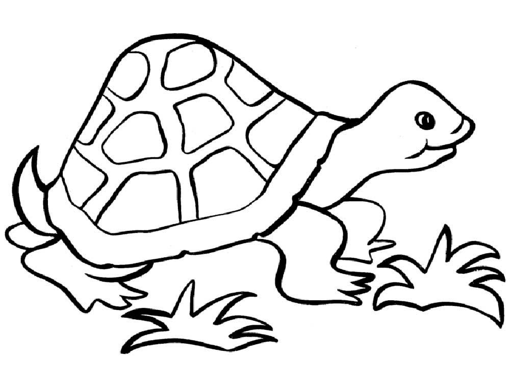 -картинки-раскраски-5 Черепаха картинки раскраски (5)
