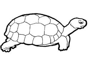 -картинки-раскраски-7-300x225 Черепаха