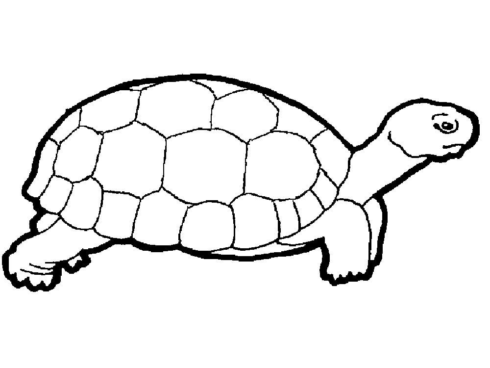 Черепаха картинки раскраски (7)