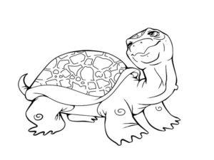 -картинки-раскраски-8-300x225 Черепаха