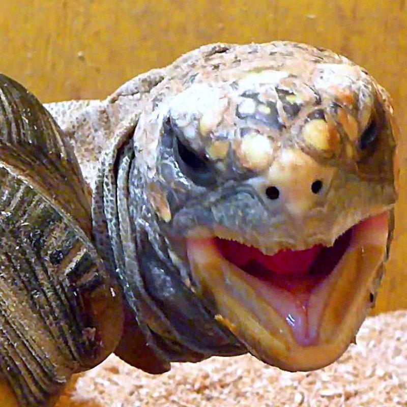 Черепаха раскраски