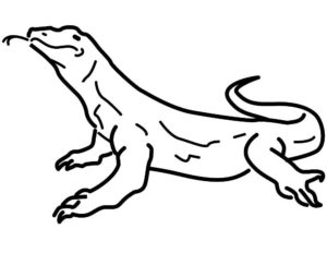 Ящерица картинки раскраски (14)