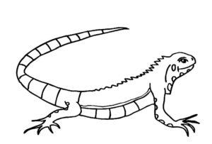 Ящерица картинки раскраски (2)