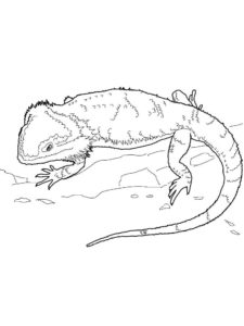 Ящерица картинки раскраски (9)