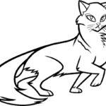 Коты воители картинки раскраски 11
