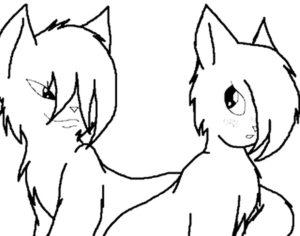 Коты воители картинки раскраски 14