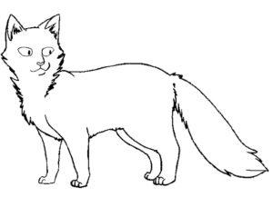 Коты воители картинки раскраски 21