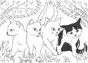 Коты воители картинки раскраски 24