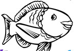 Большая рыба   онлайн раскраска